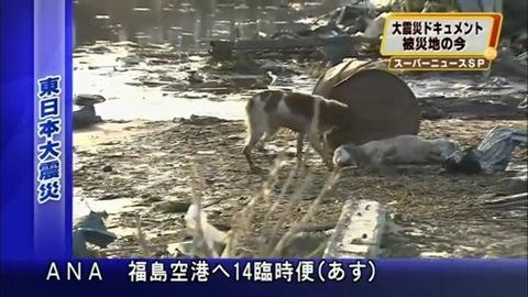 Собачья сеперверность (видео)