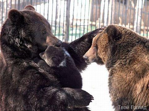 Фото медведей. Папа и дочь