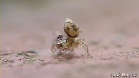 Потрясающее видео муравей и паук