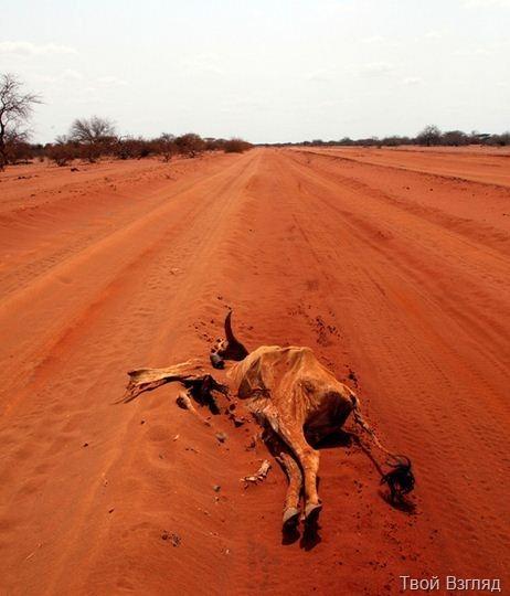 Засуха и голод в Африке