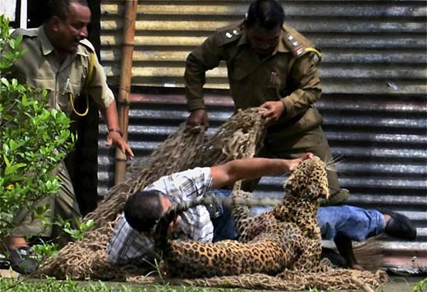 Леопард растерзал 13 человек