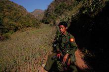 Уничтожение маковых полей в Мьянме